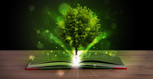 Open book with magical green tree and rays of light Royalty Free Stock Photo