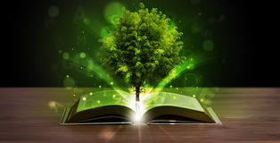 Open book with magical green tree and rays of light. On wooden deck royalty free stock image
