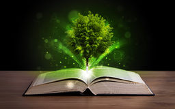 Open book with magical green tree and rays of light Royalty Free Stock Photos