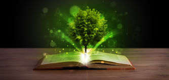 Open book with magical green tree and rays of light royalty free illustration
