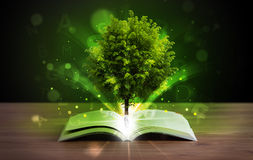 Open book with magical green tree and rays of light Stock Image