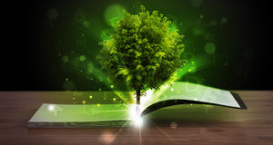 Open book with magical green tree and rays of light. On wooden deck stock photo