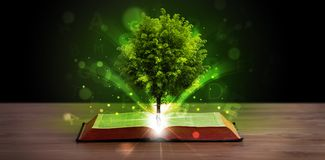 Open book with magical green tree and rays of light. On wooden deck royalty free stock photo