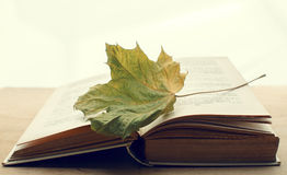 Open book and maple leaf Royalty Free Stock Photography