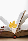 Open book and maple leaf Stock Photo
