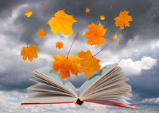 Open book and maple leaves Royalty Free Stock Image