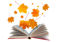 Open book and maple leaves Royalty Free Stock Photo