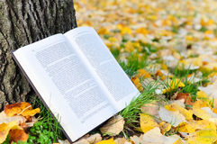 Open book in nature Royalty Free Stock Image