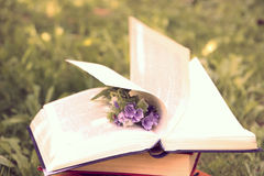 Open book on nature background. Knowledges is power Stock Image