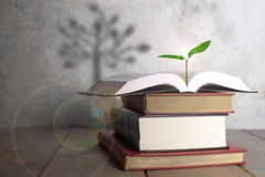 Open book with tree shadow Royalty Free Stock Photos