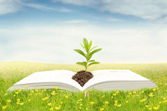 Open book with plant on meadow. Image of a plant on the empty page of the book at the meadow, shot in the springtime Royalty Free Stock Photos