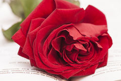 Open book and red rose Royalty Free Stock Photography