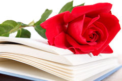 Open book and red rose on pages of book on white background Stock Photos
