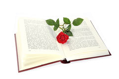 Open book and rose. Royalty Free Stock Image