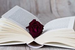 Open book and rose bloom Royalty Free Stock Photos