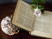 Open book with rose blossom and shell Stock Photo