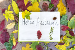 Open book surround by leafs with hello autumn sign Stock Images