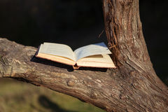 Open book on tree Royalty Free Stock Image