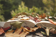 Open book withl autumn leaves Royalty Free Stock Photo