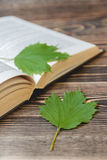 Open Book on Wooden Desk with Autumn Leaves Close up. Royalty Free Stock Image