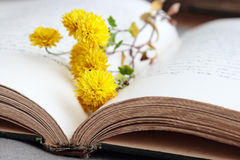 Open book with yellow flowers. Open book with yellow small flowers Royalty Free Stock Photos