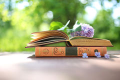 Open books outdoor. Knowledge is power. Book in a forest. Book on a stump Stock Images