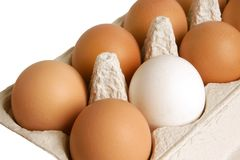 Open box with eggs Stock Photos