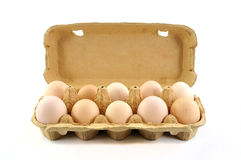Open box with ten fresh bio eggs. Fresh natural bio eggs in open box isolated on a white background Royalty Free Stock Images