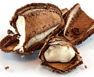 Open brazil nut Stock Images
