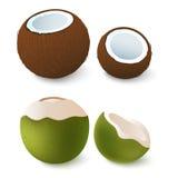 Open bruine en groene kokosnoot Exotische attributen van de zomervakantie Geïsoleerd op wit Vector 3d illustratie Royalty-vrije Stock Foto's