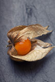 An open calyx, exposing the ripe fruit of physalis peruviana. On black tile plate Stock Images