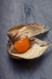An open calyx, exposing the ripe fruit of physalis peruviana Stock Images