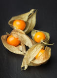 An open calyx, exposing the ripe fruit of physalis peruviana Royalty Free Stock Images