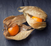 An open calyx, exposing the ripe fruit of physalis peruviana stock photo