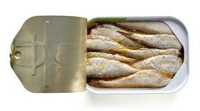 Open can of sardines isolated on white, from above Stock Photography
