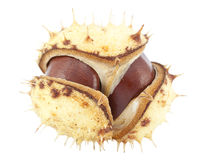 Open chestnut Royalty Free Stock Photos