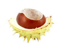 Open chestnut Royalty Free Stock Photo