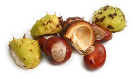 Open Chestnuts  Royalty Free Stock Photo