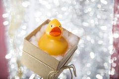 Open christmas gift box with rubber duck Royalty Free Stock Images