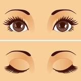 Open Closed Eyes. Closeup detail illustration of beautiful female brown eyes with eyelids open and closed Royalty Free Stock Image