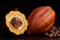 Open cocoa pod Stock Photography
