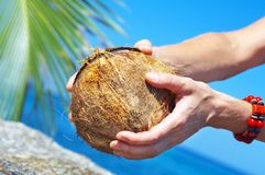 Open coconut stock photography