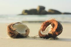 Open coconut on white sand in beach Stock Images