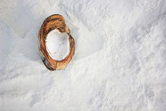 Open coconut on white sand Stock Images