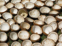 Open coconuts. Plenty of open coconuts drying on the sun. Philippines Stock Photography