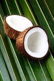 Open coconuts. On a palm leaf background Stock Images