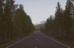 Open Concrete Road Between Forest Trees Royalty Free Stock Images