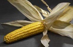 Open corn cob Royalty Free Stock Photos