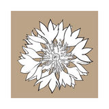 Open cornflower blossom, top view, sketch style vector illustration Royalty Free Stock Photo