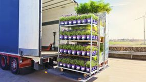 There is a loading to the truck trailer . Open delivery truck loaded with pot plants pallets . There is a loading to the truck trailer royalty free stock image